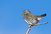 BRD 07 RF0033 01