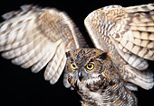 BRD 07 RK0083 07