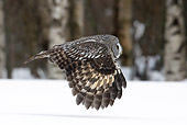 BRD 07 WF0004 01
