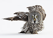 BRD 07 WF0006 01