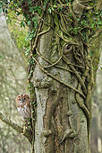 BRD 07 WF0010 01