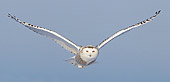BRD 07 WF0012 01