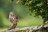 BRD 07 WF0013 01