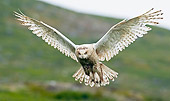 BRD 07 WF0017 01