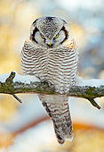 BRD 07 WF0019 01