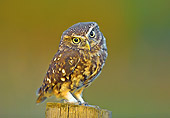 BRD 07 WF0022 01