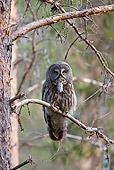 BRD 07 WF0025 01