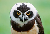 BRD 07 GR0002 01