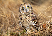 BRD 07 LS0001 01