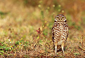 BRD 07 LS0002 01