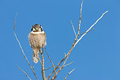 BRD 07 NE0003 01