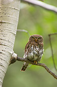 BRD 07 NE0011 01