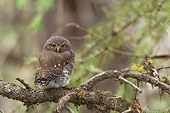 BRD 07 NE0013 01