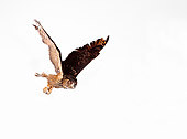 BRD 07 RK0024 01