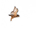 BRD 07 RK0024 10