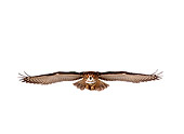 BRD 07 RK0025 06