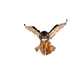 BRD 07 RK0026 04