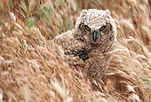 BRD 07 RK0033 26
