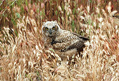 BRD 07 RK0033 40