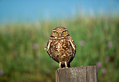 BRD 07 RK0036 03