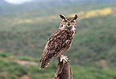 BRD 07 RK0055 15