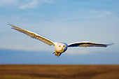 BRD 07 SK0002 01