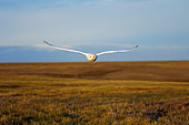 BRD 07 SK0003 01