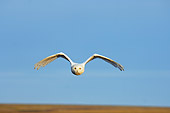 BRD 07 SK0004 01