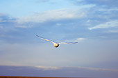 BRD 07 SK0006 01