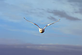 BRD 07 SK0007 01