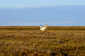 BRD 07 SK0008 01