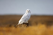 BRD 07 SK0012 01
