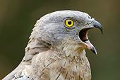 BRD 08 AC0006 01