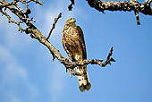 BRD 08 GL0004 01