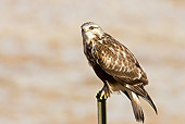 BRD 08 RF0056 01