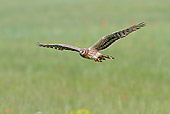 BRD 08 WF0003 01