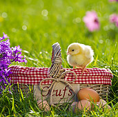 BRD 10 KH0009 01