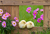 BRD 10 KH0011 01