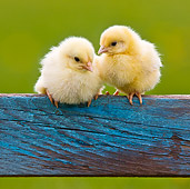 BRD 10 KH0016 01