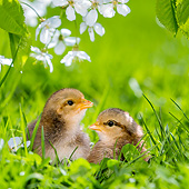 BRD 10 KH0018 01