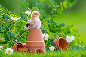 BRD 10 KH0023 01