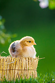 BRD 10 KH0026 01