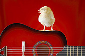 BRD 10 XA0001 01