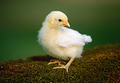 BRD 10 GR0006 01