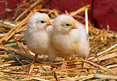 BRD 10 LS0001 01