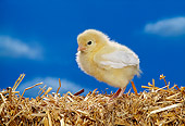 BRD 10 RK0005 02