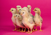 BRD 10 RK0008 07