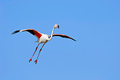 BRD 11 AC0007 01