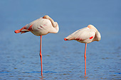 BRD 11 AC0011 01