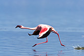 BRD 11 MC0001 01